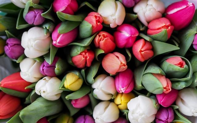 Tulpen als symbool voor personeelsvertegenwoordiging