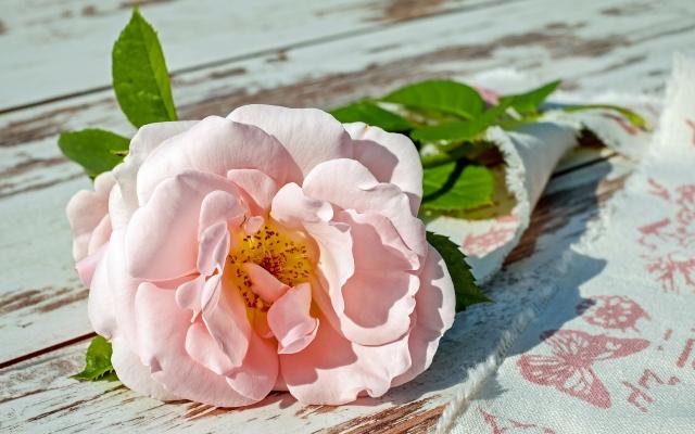 Roos als symbool voor ontroerend moment